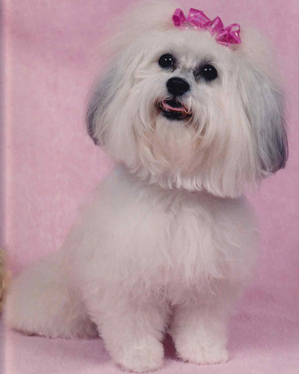 pets_adoption_6386004_122717_11892017.jpg