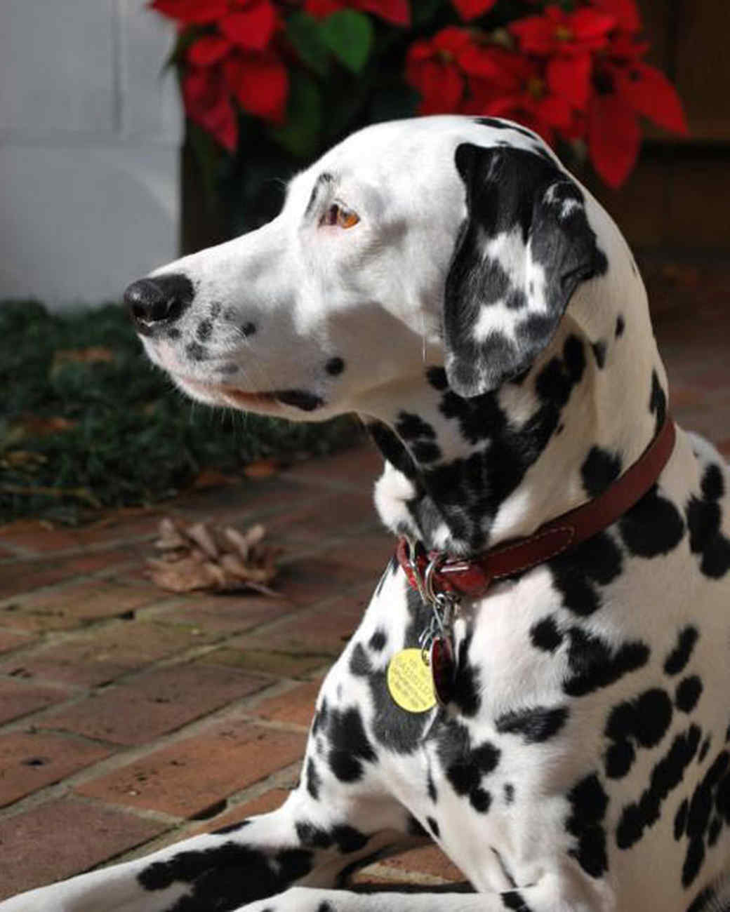 pets_adoption_6418758_122717_13971702.jpg