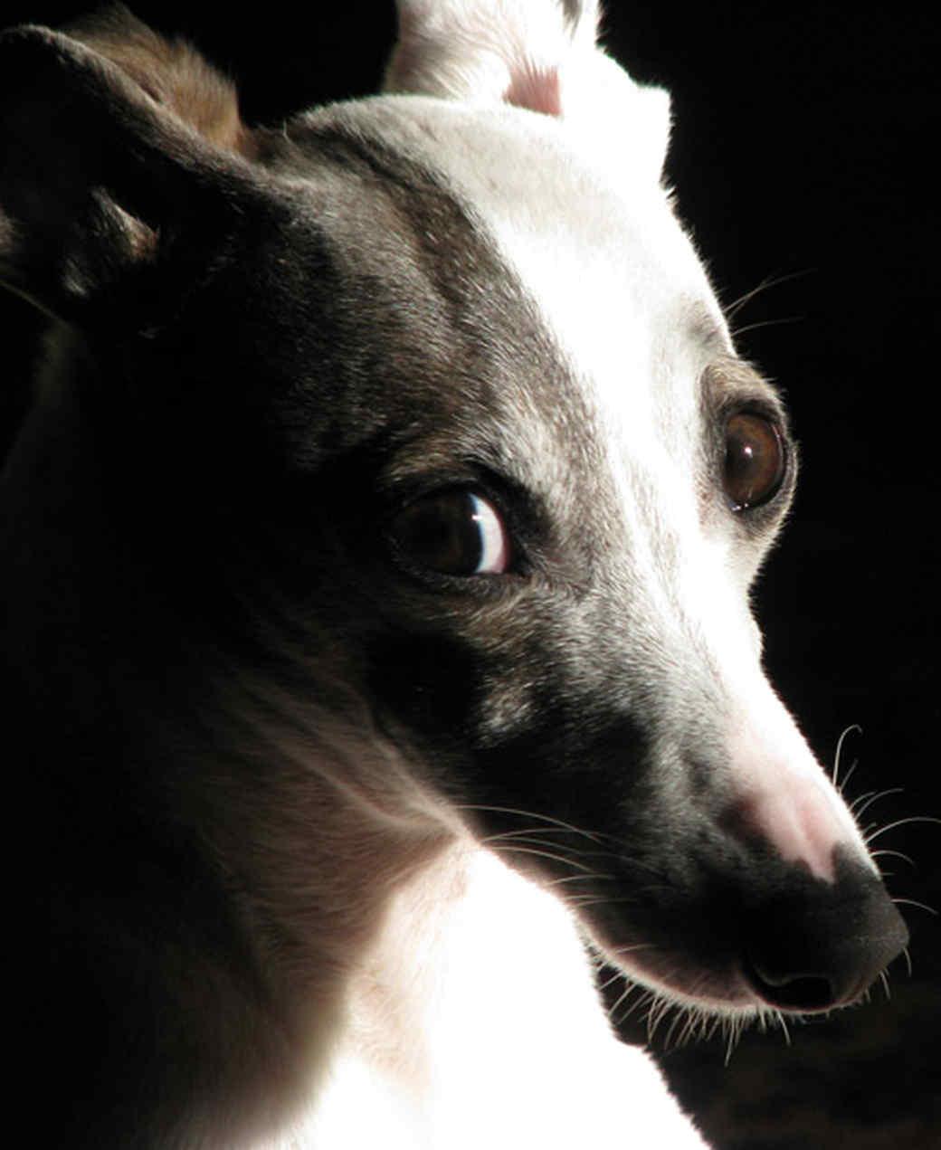 pets_adoption_7023408_122717_10940859.jpg