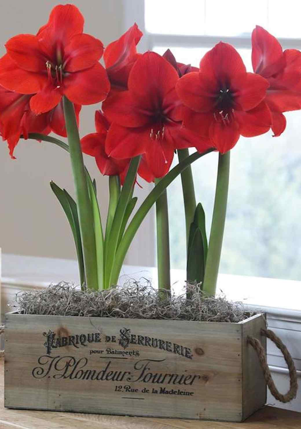 valentinesdayflowers-0117-woodencrate.jpg (skyword:392908)