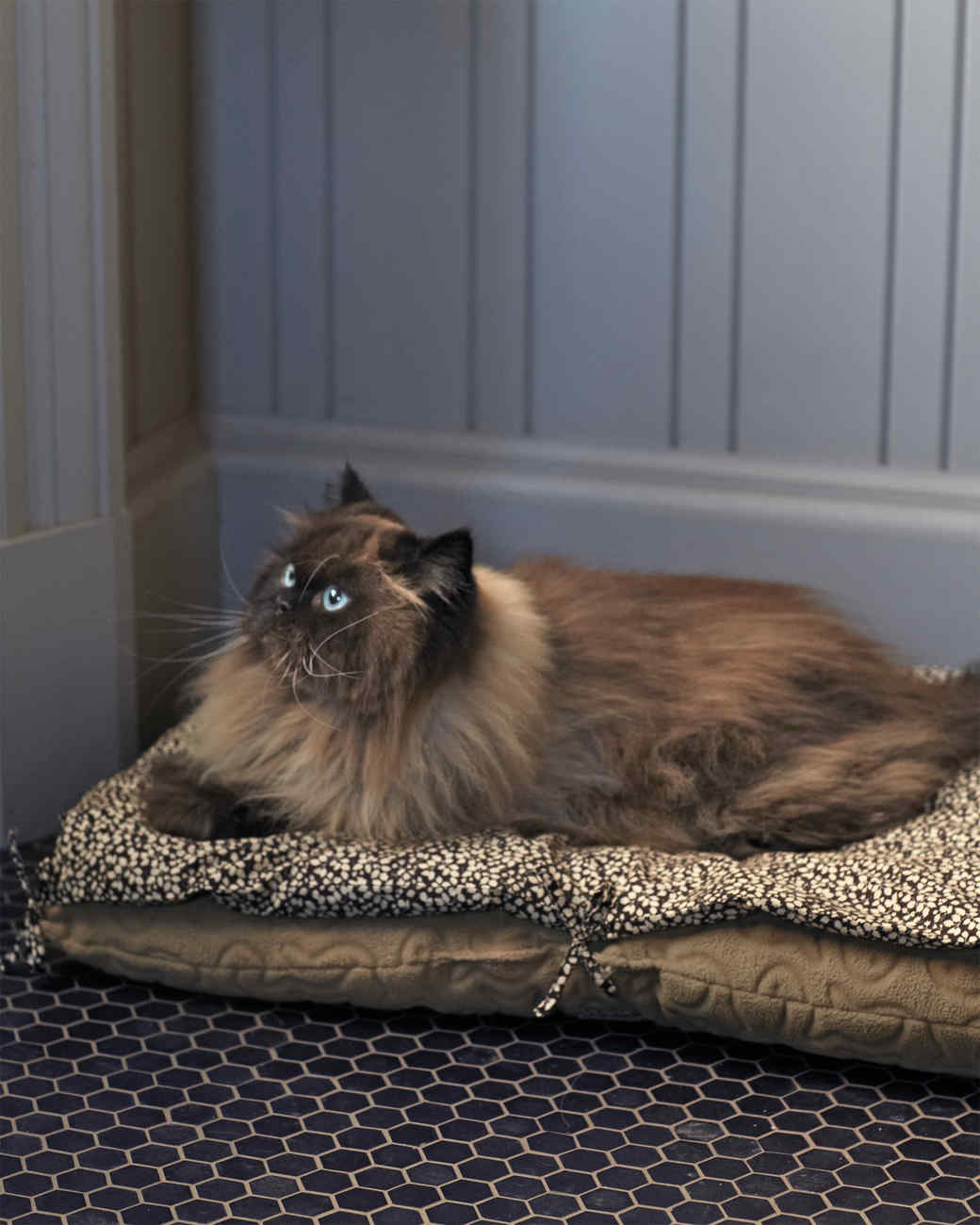 catnip-cat-bed-with-cat-0031-mld109636.jpg
