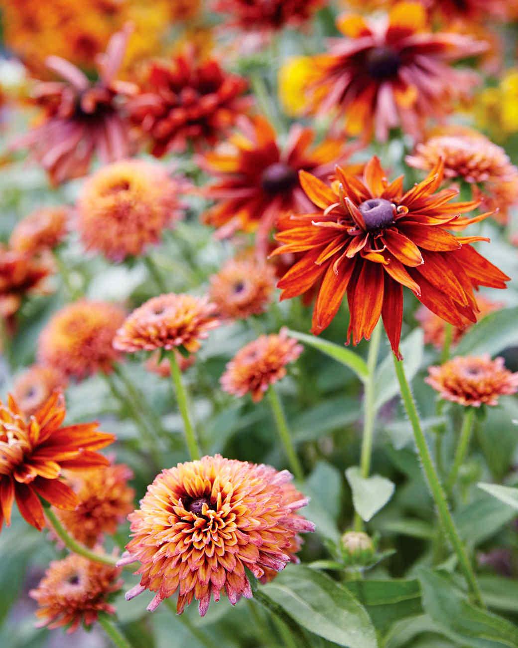rockefeller-orange-flowers-170-d112371.jpg