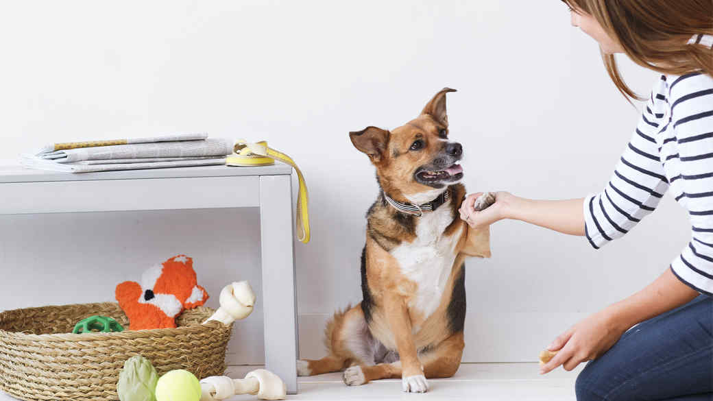 bella-black-brown-white-dog-008-d112217.jpg