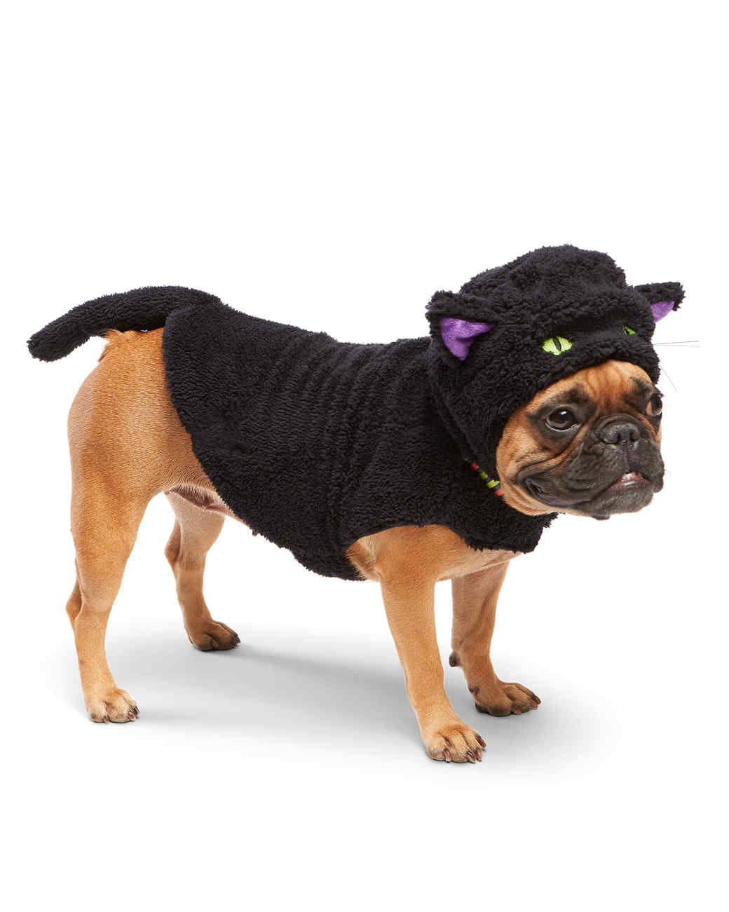 mspets-dog-halloween-blackcat-mrkt-0915.jpg