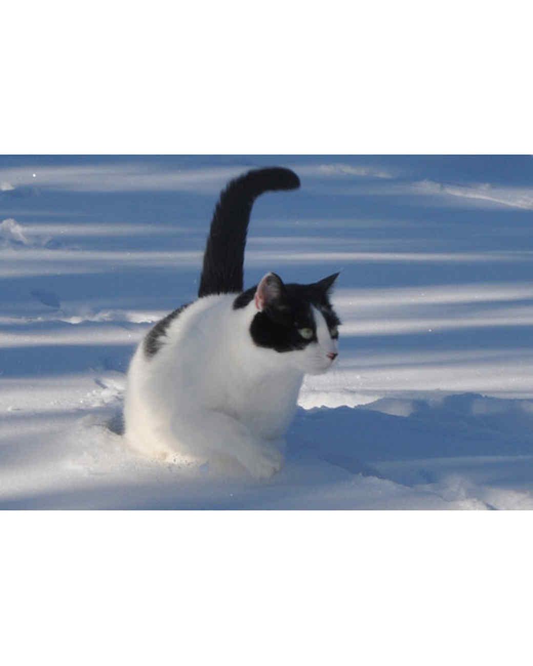 pets_snowangels_7077563_122717_16621526.jpg