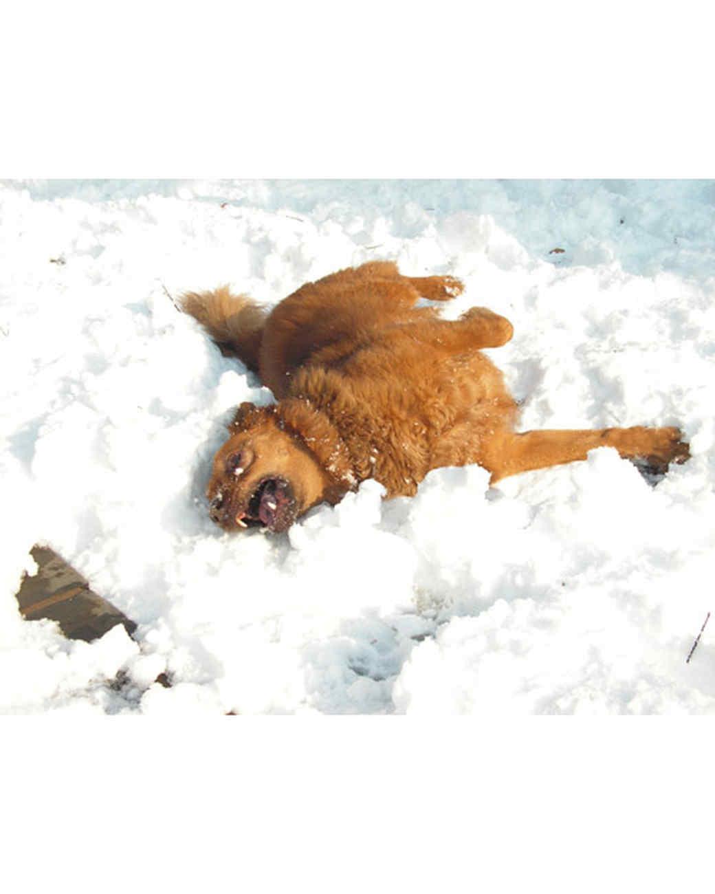 pets_snowangels_7080225_122717_18557809.jpg