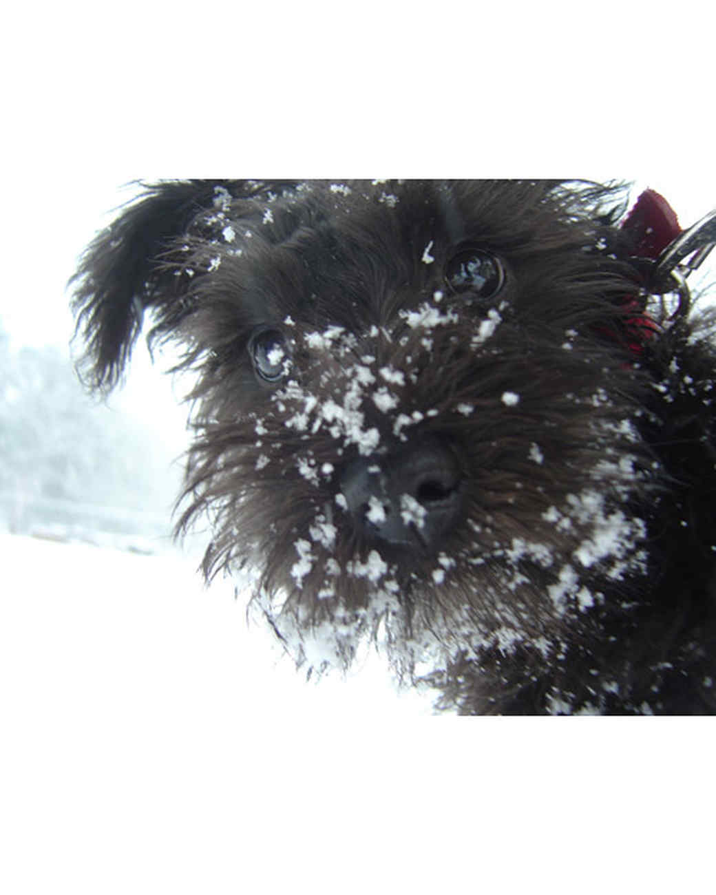 pets_snowangels_7094045_122717_18947009.jpg