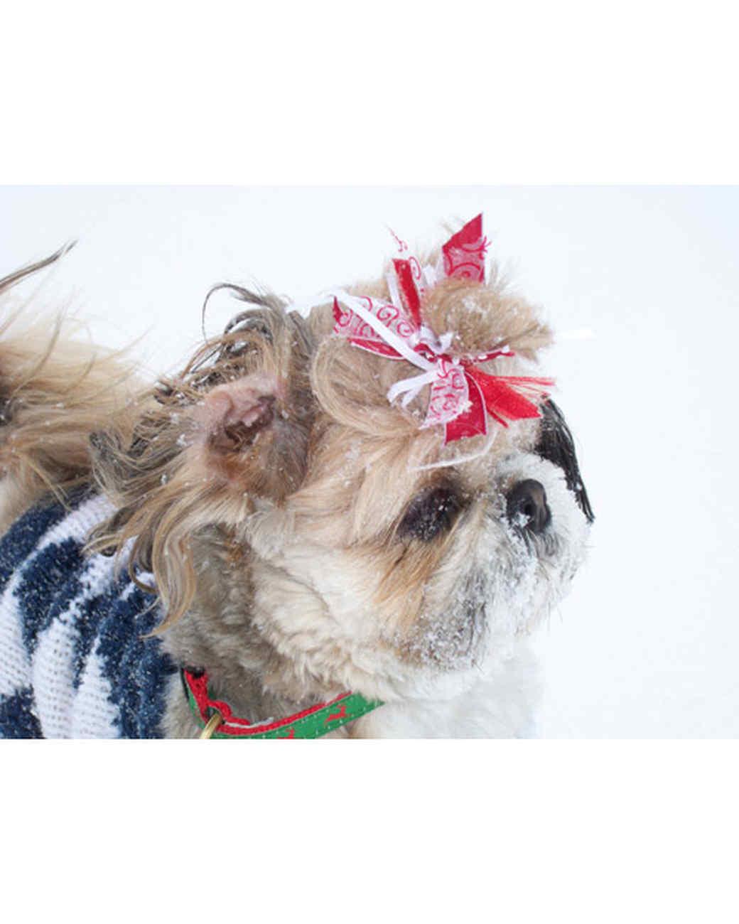 pets_snowangels_7159574_122717_19013479.jpg