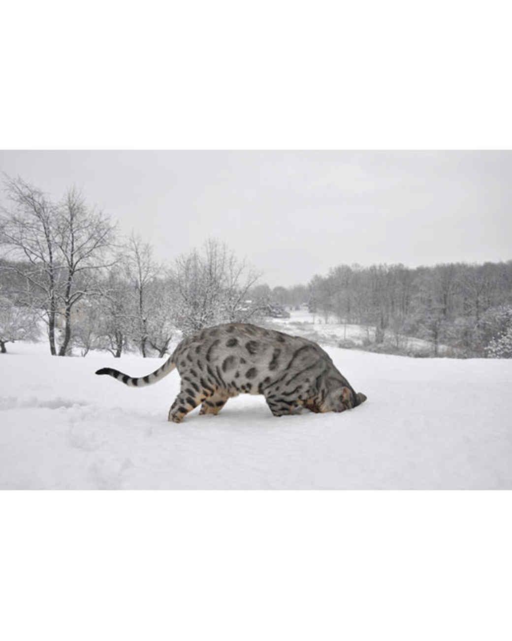 pets_snowangels_7201685_122717_16621526.jpg