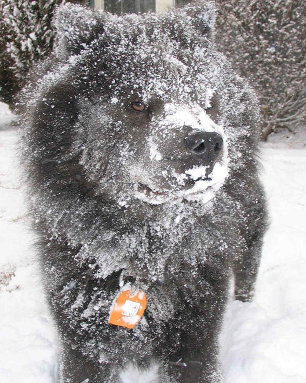 pets_snowangels_7247613_122717_11404171.jpg