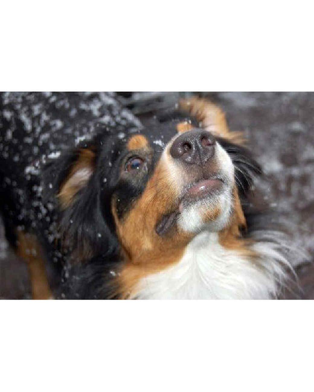 pets_snowangels_7253819_122717_11169189.jpg