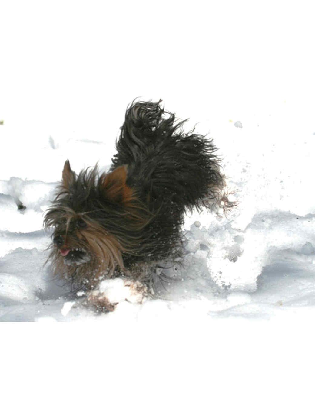 pets_snowangels_7254291_122717_11088505.jpg
