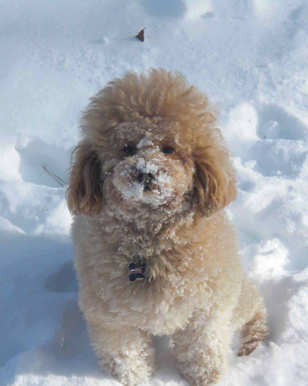 pets_snowangels_7268010_122717_19176171.jpg