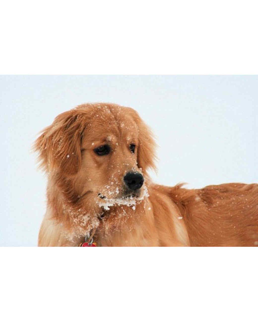 pets_snowangels_7278326_122717_19188896.jpg