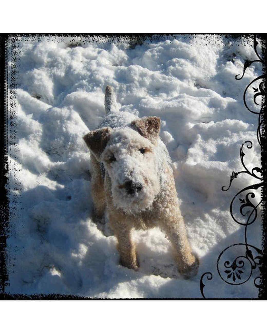 pets_snowangels_7301334_122717_19226789.jpg