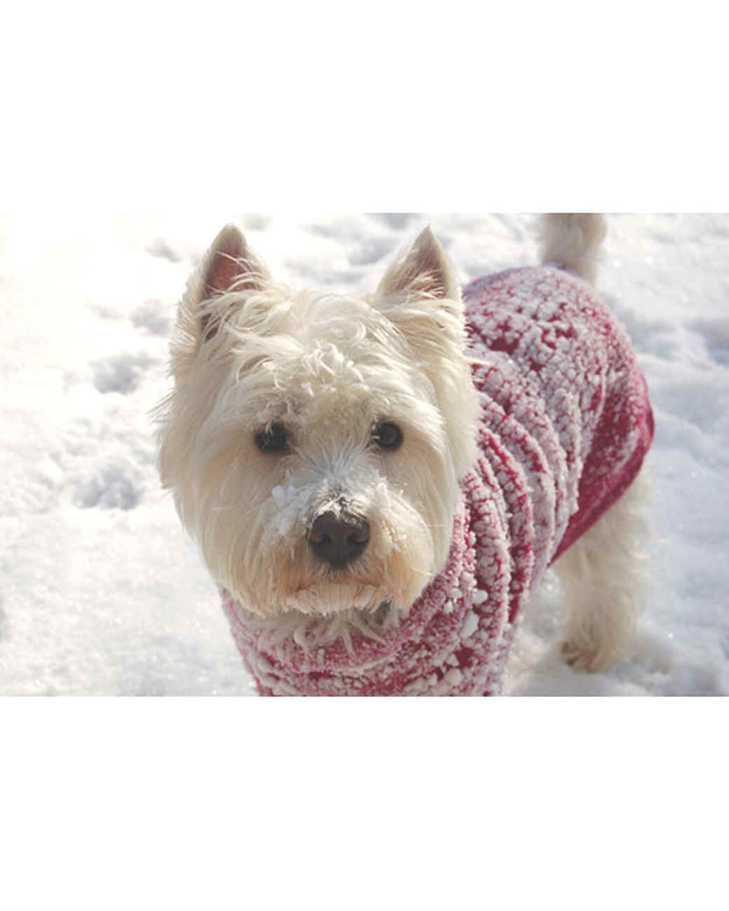 pets_snowangels_7308099_122717_10938635.jpg