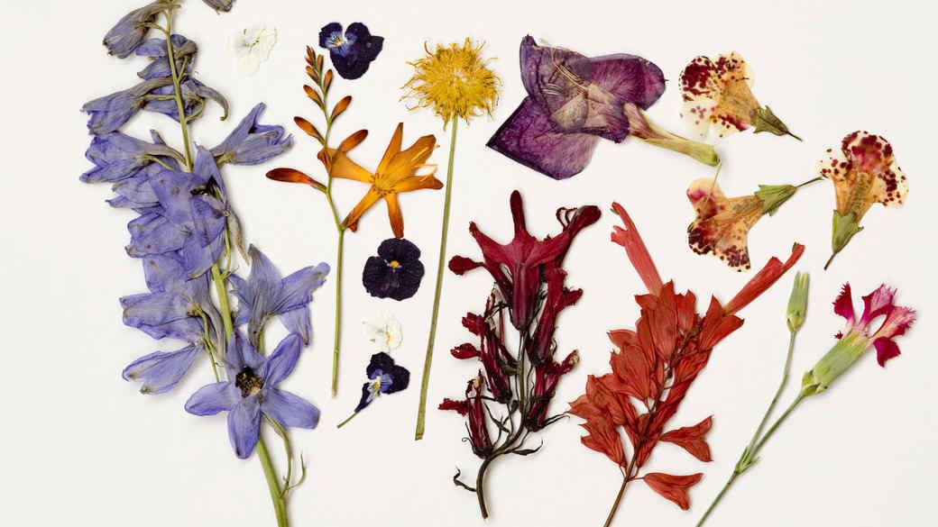 Pressed Flowers Craft