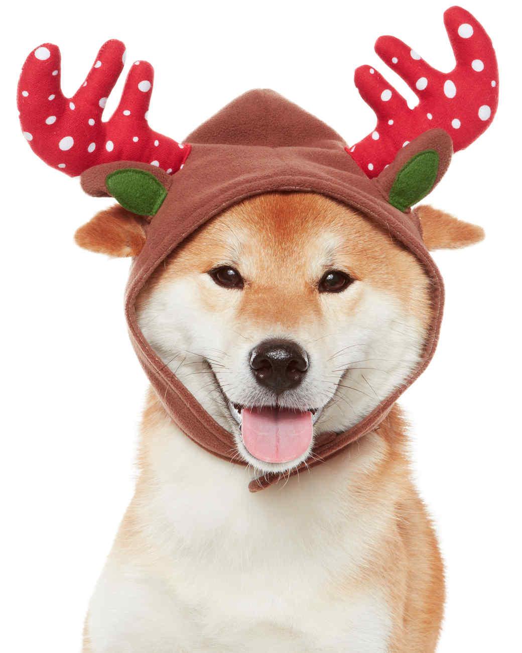 mspets-holiday-reindeerantlers-mrkt-1113.jpg