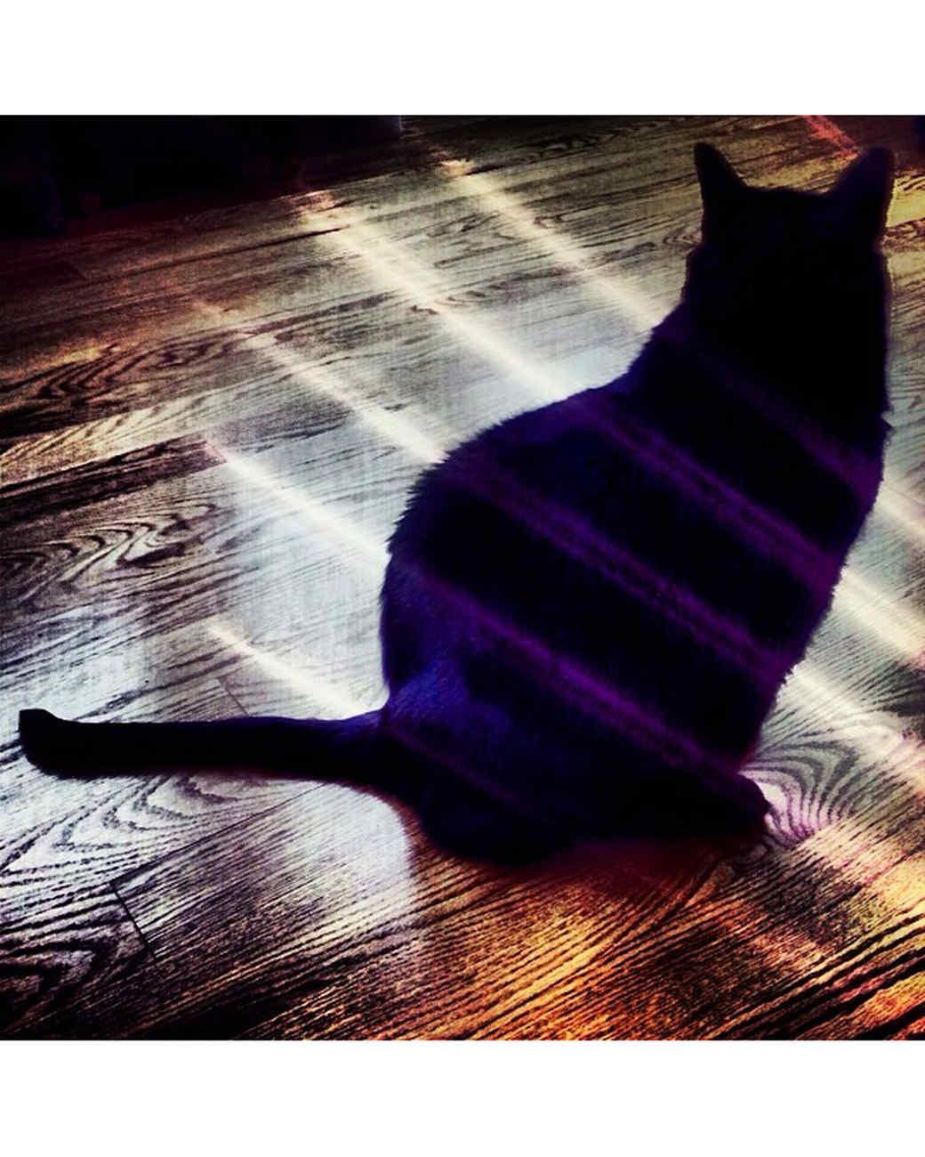 halloween-hunt-ugc-black-cat-argomorpheus.jpg