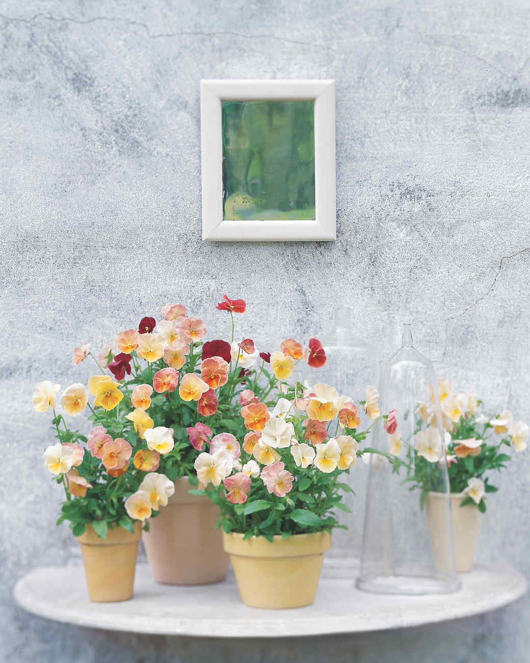 Martha Stewart Livings Favorite Spring Flowers Martha Stewart