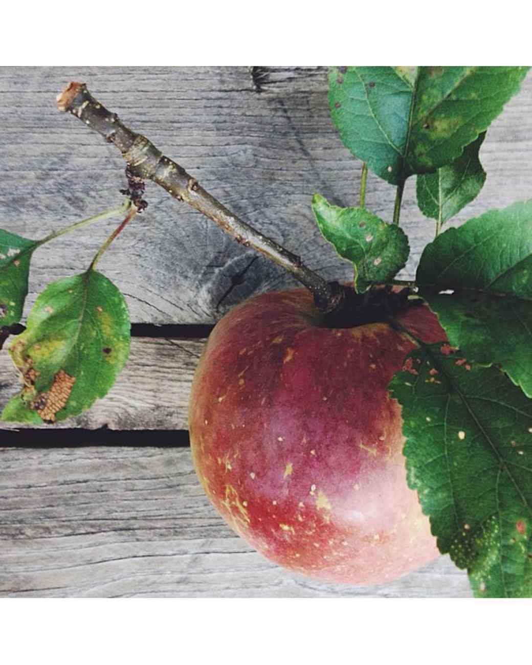 halloween-hunt-ugc-apples-rootedinthevalley.jpg