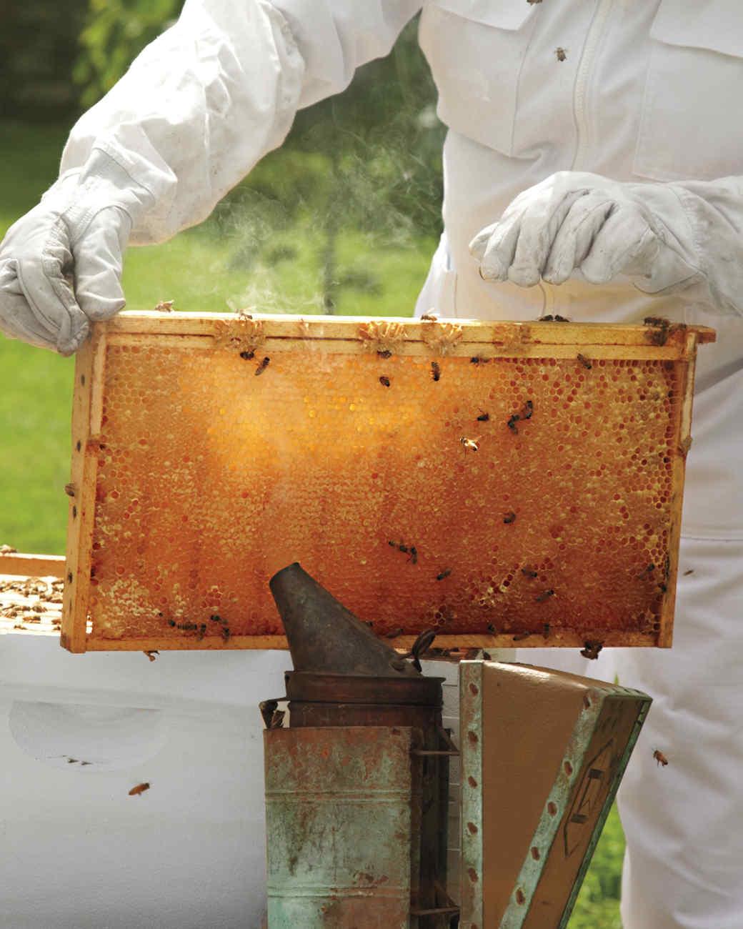 hive-maintenance-5-ms-column-0672-mld106618.jpg