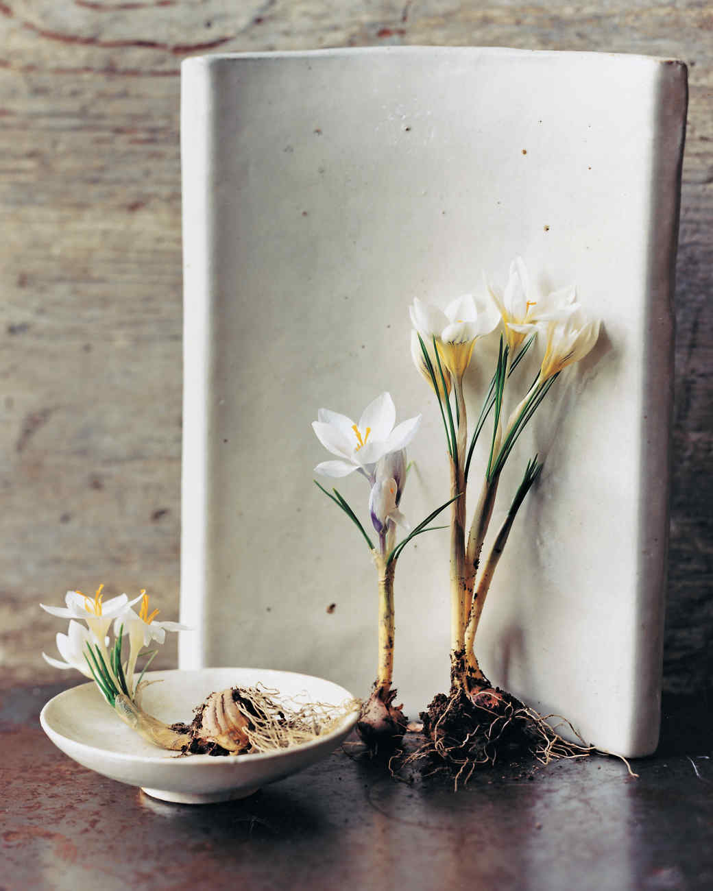 four-white-flowers-goodthings-ml102n3rs-0115.jpg