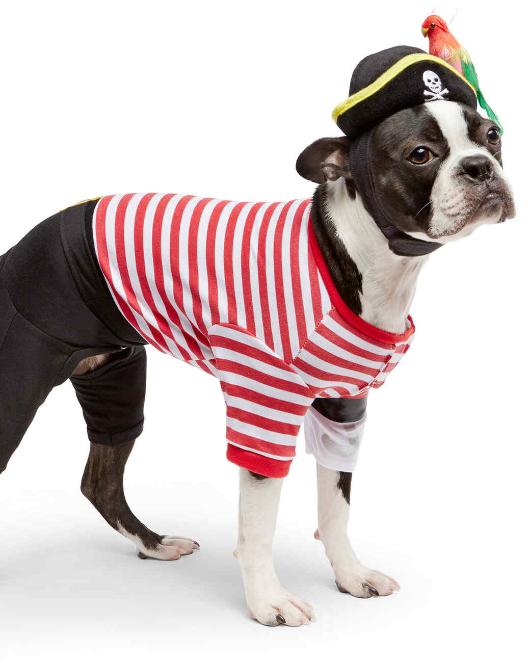 Matching Owner and Dog Costumes for a Pet-rifyingly Cute Halloween | Martha Stewart  sc 1 st  Martha Stewart & Matching Owner and Dog Costumes for a Pet-rifyingly Cute Halloween ...