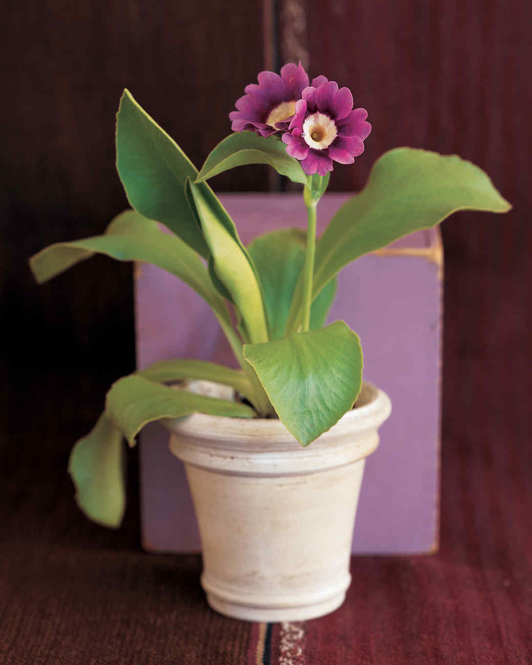potted-purple-flower-goodthings-ml904aa1-0115.jpg