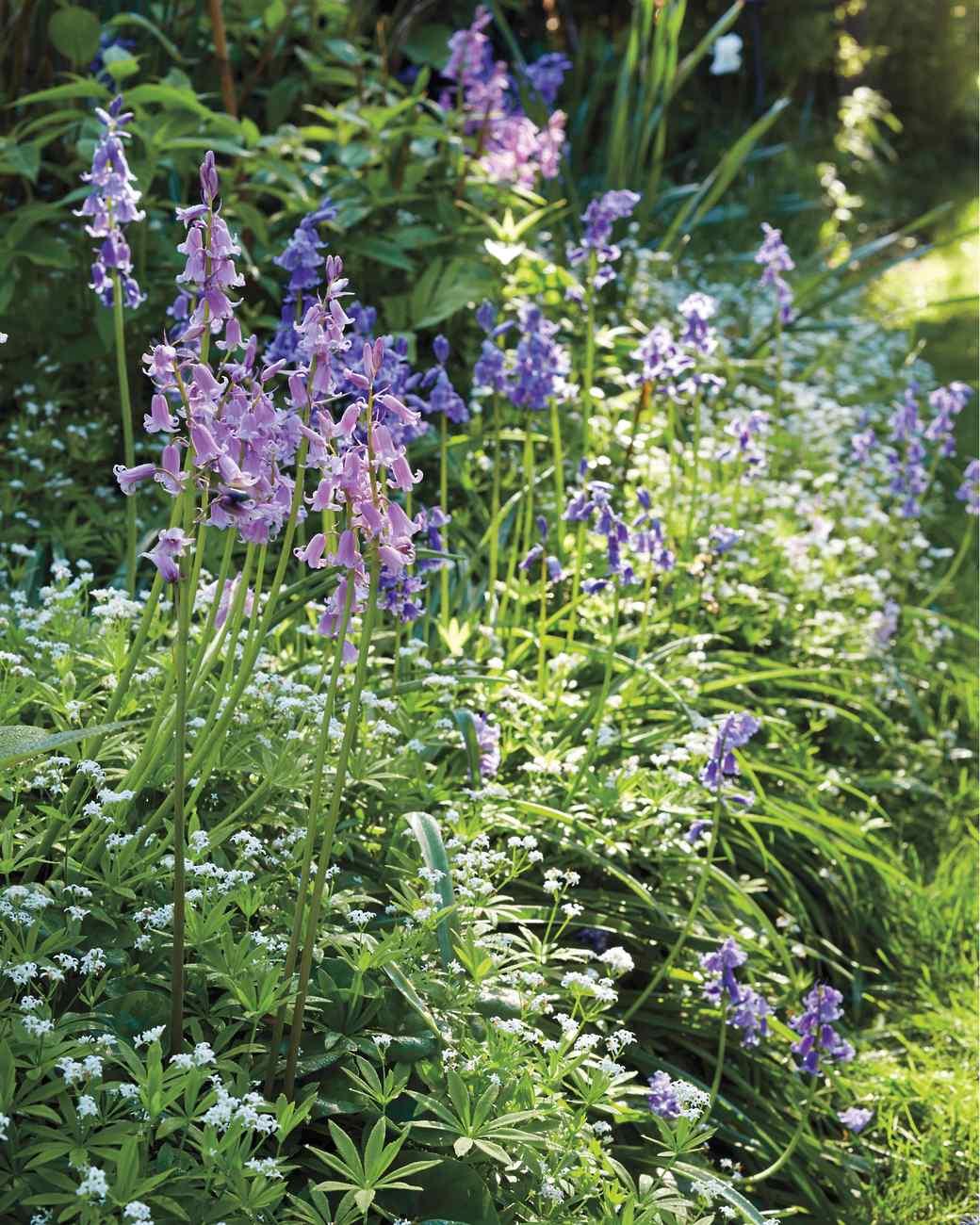 sakonnet-garden-rhode-island-0156-d112230-0216.jpg