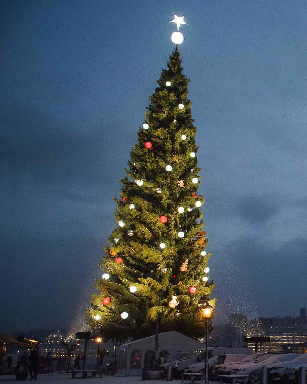 Stockholm Christmas Tree 2016