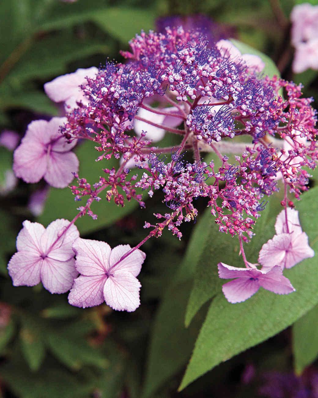 heckler-hydrangea-garden-522186aj-dsc6223-s111010.jpg
