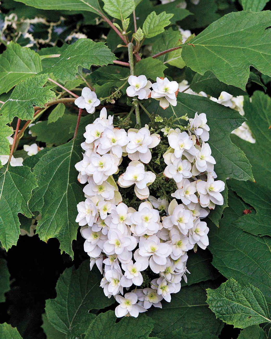 heckler-hydrangea-garden-522197aj-dsc6232-s111010.jpg