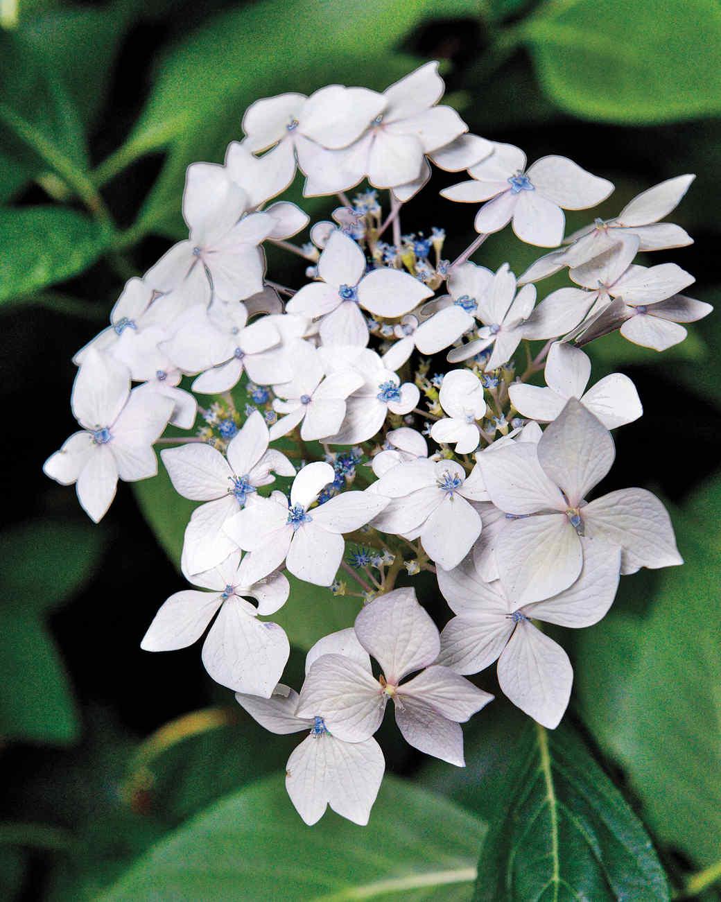 heckler-hydrangea-garden-522433aj-dsc8107-s111010.jpg