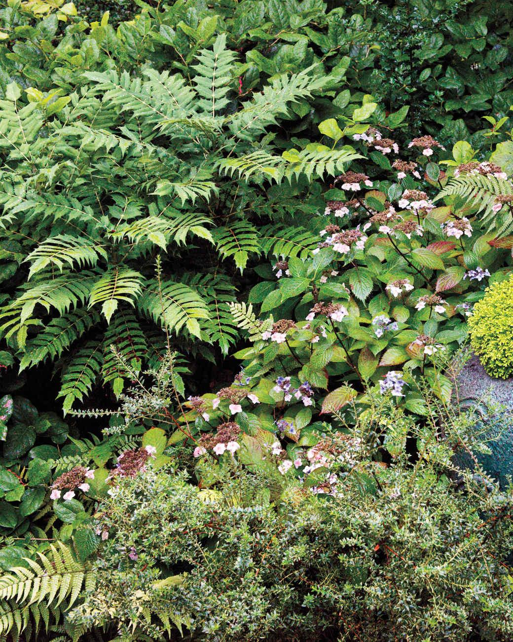 heckler-hydrangea-garden-522473aj-dsc8147-s111010.jpg