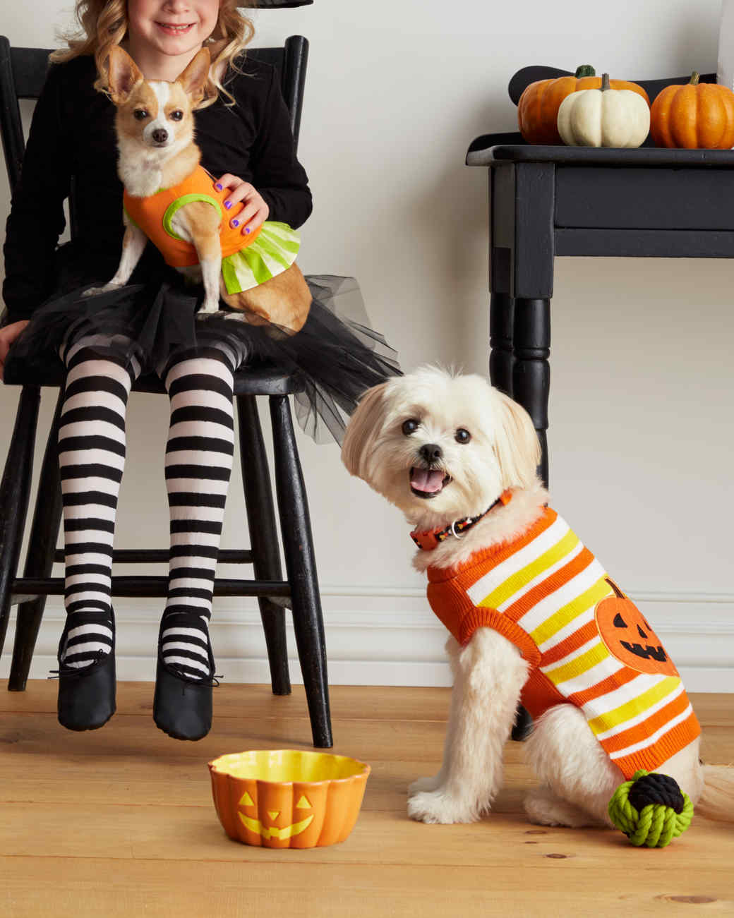 mspets-dog-halloween-pumpkinsweater-d112236-mrkt-0915.jpg