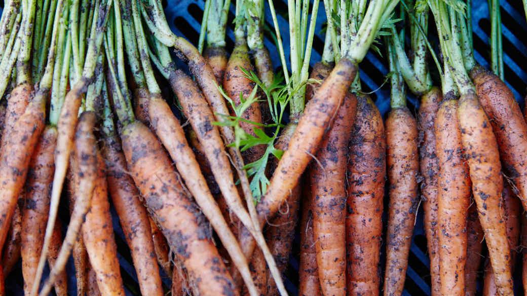 thanksgiving-anne-quatrano-carrots-19-can-7004-d110790.jpg