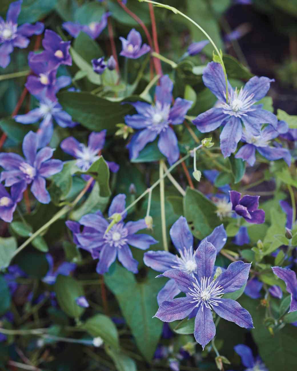 meadowburn-sakonnet-garden-rhode-island-086-d112361-0216.jpg