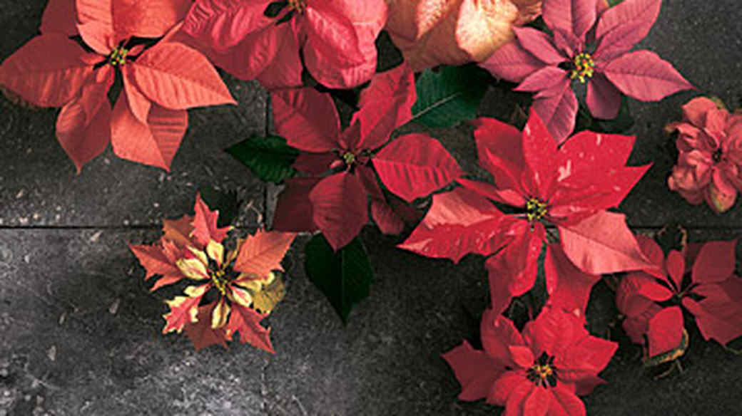 good_things_3_beautiful_way_to_decorate_with_plants_this_year.jpg