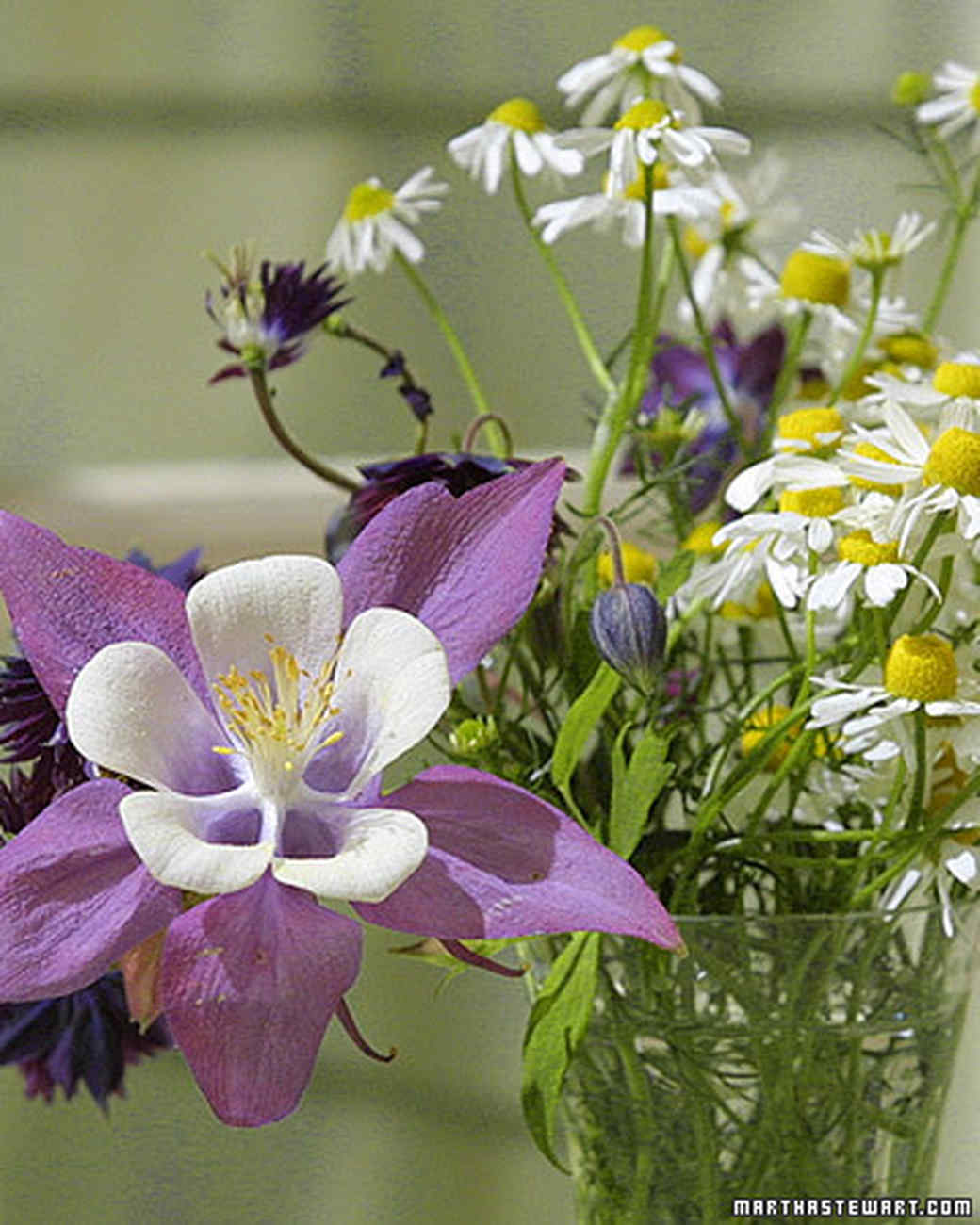 Full Sun Spring Perennials For A Strikingly Gorgeous Garden Martha