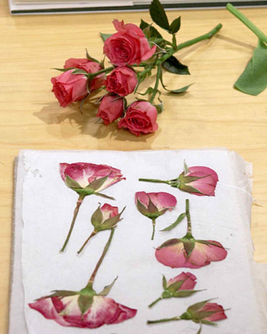 Pressing flowers with janie martha stewart mightylinksfo