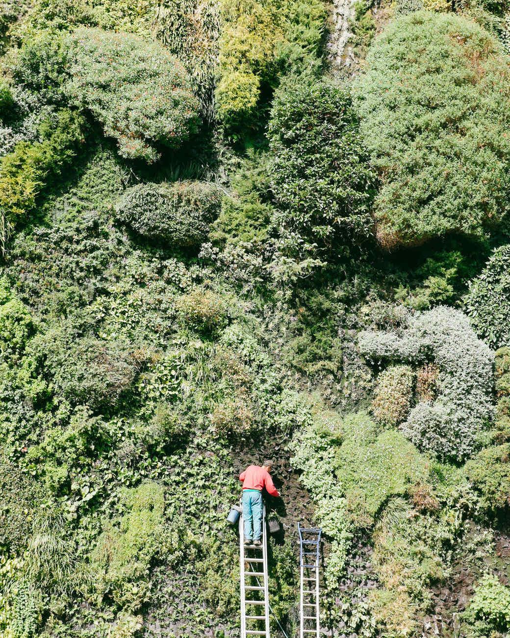 Vertical Gardens Or Living Walls