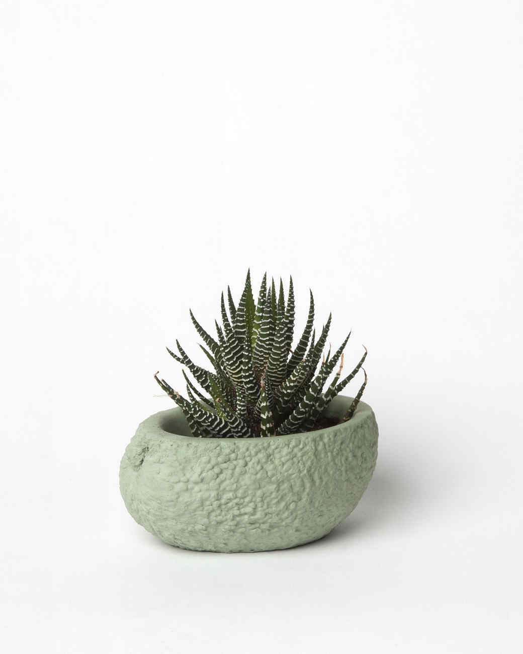 chen-williams-avocado-planter