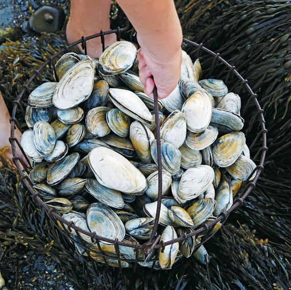 bucket of clams
