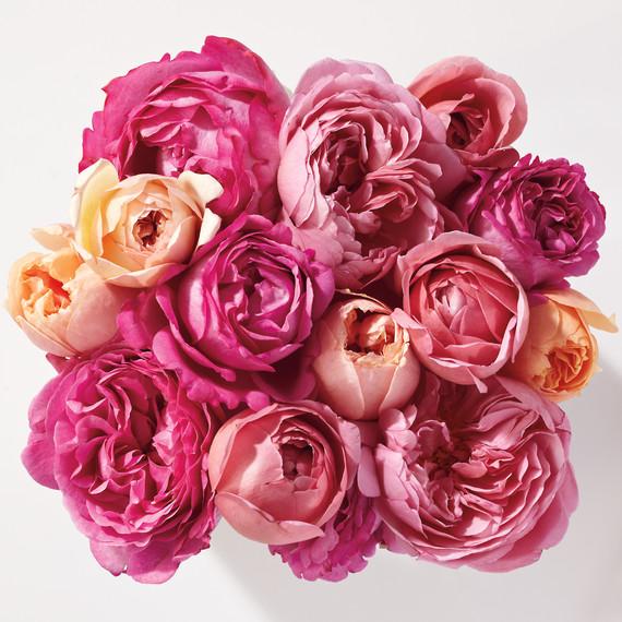 roses-md109758.jpg