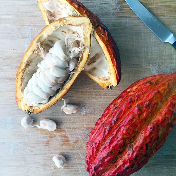 cacao-pods-1-1015.jpg