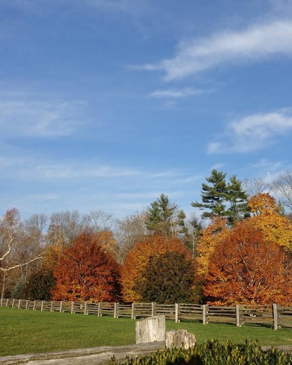 fall-foliage-farm.jpg