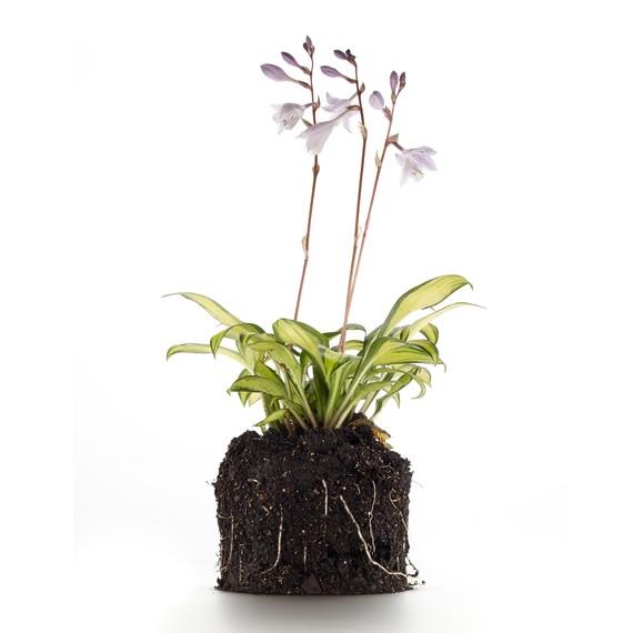 plant-395-d111492.jpg