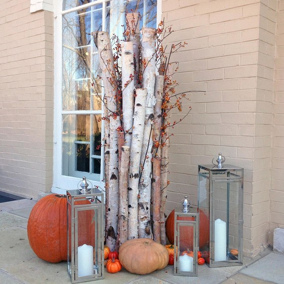 pumpkin-birch-1001.jpg (skyword:189878)