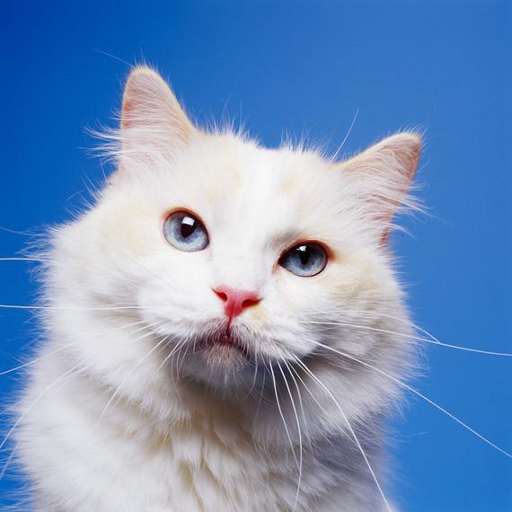 white-cat-portrait.jpg